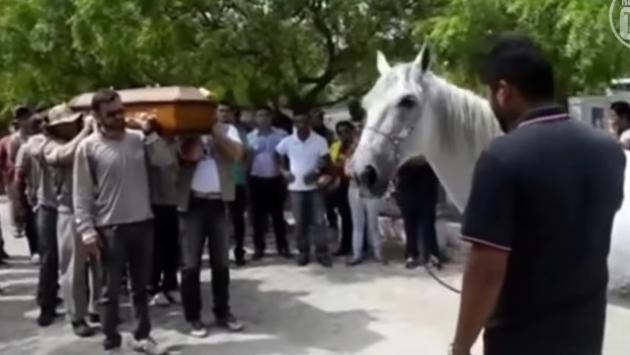 Caballo llora y se despide de su dueño en funeral