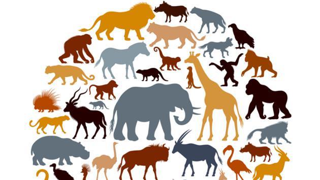 ¡Dime tu fecha de nacimiento y te diré qué tipo de animal serías!