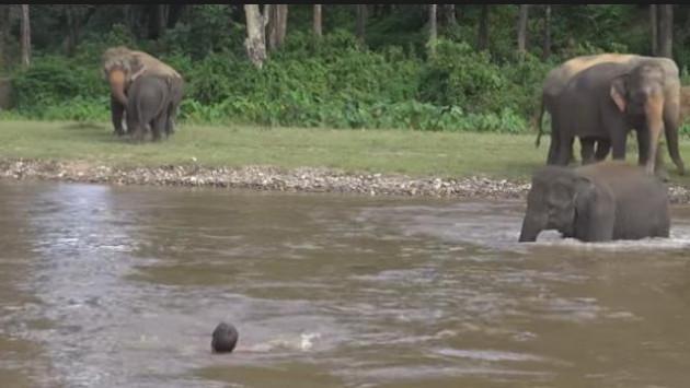 Elefante salva a su cuidador de ser arrastrado por el río