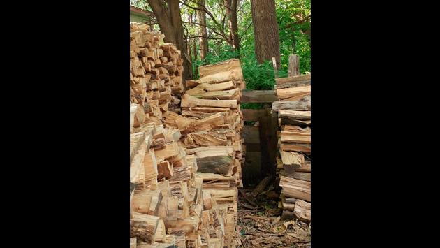 En Facebook todos tratan de hallar al gato oculto entre estos troncos. ¿Aceptas el reto?