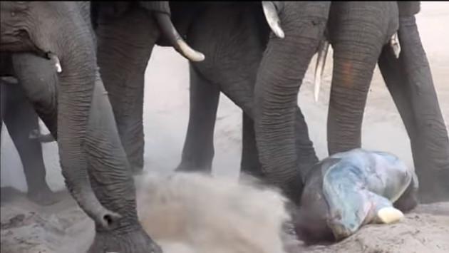 Este video de una mamá elefante y su pequeño hijo, ¡te conmoverá!