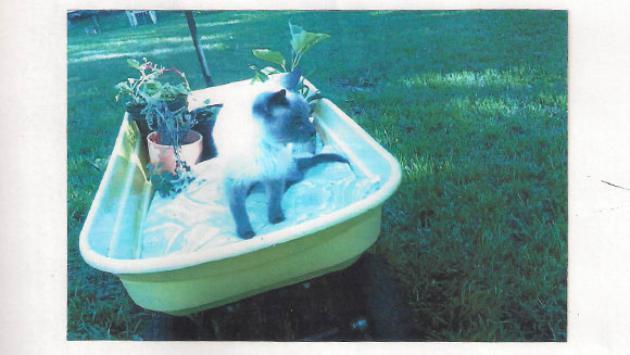 Este gato obtuvo un Récord Guinness. Mira por qué