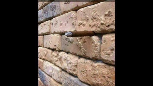 En Facebook, muchos intentan descubrir la ilusión óptica de esta foto. ¿Tú puedes?