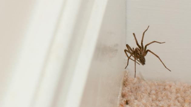Insecticida casero para espantar arañas