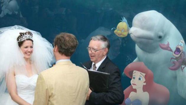 ¡Mira a esta ballena aparecerse en un matrimonio! (FOTO)