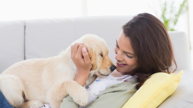 Truco  para limpiar accidentes de tus mascotas