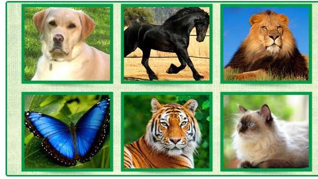 ¡Tu animal preferido de la imagen revela rasgos de tu personalidad!