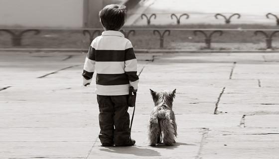 La historia del perrito cojo