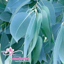 ¿Cómo prevenir la diabetes con las hojas del eucalipto?