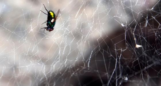 La mosca en la telaraña