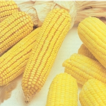 Infusión de maíz durante el embarazo.