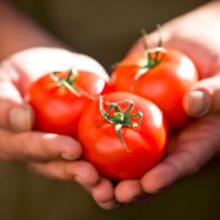 Previene las enfermedades Cardiovasculares con Puré de Tomate